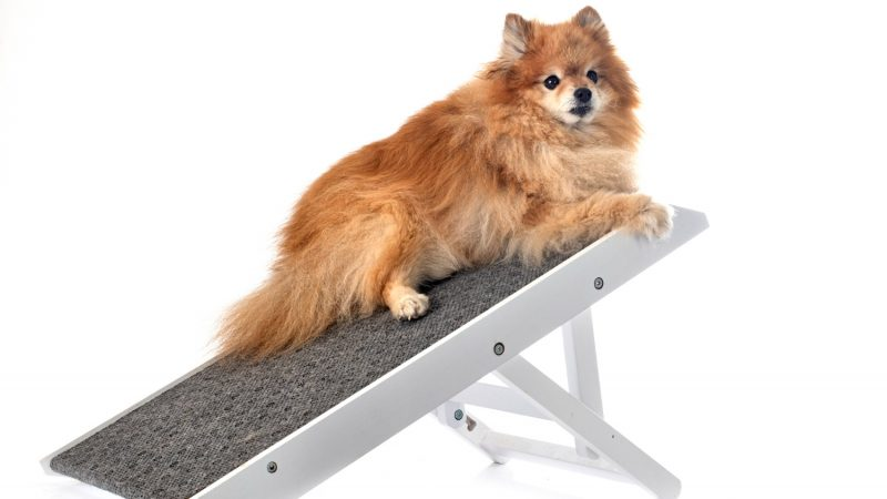 The Best Dog Ramps for Cars, SUVs and Trucks in 2021