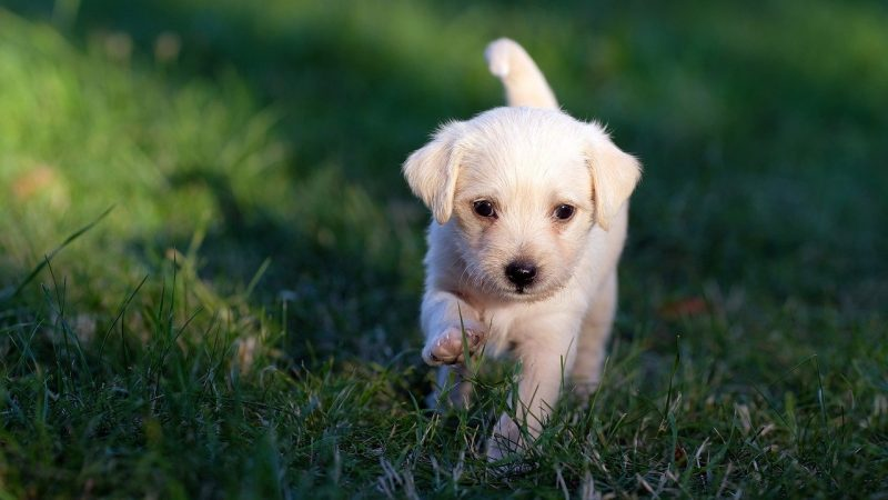 When is a Good Time for a Puppy to Start Drinking Water?