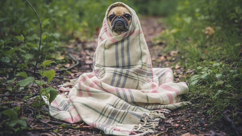 A Silent Killer: Everything You Need To Know About The Symptoms, Treatment And Prevention Of Heartworm